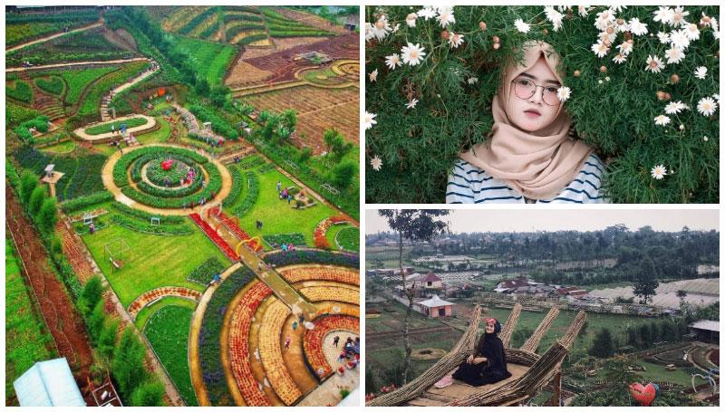 Taman Bunga Kutabawa, Pesona Hamparan Taman Bunga Luas dengan Latar Belakang Gunung Slamet yang Gagah!
