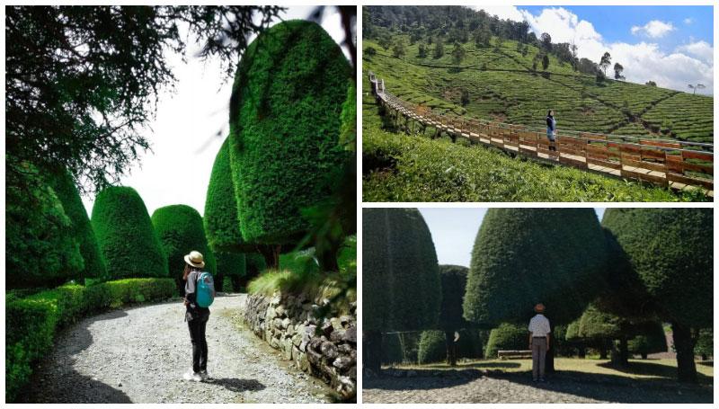 Bukit Jamur Ciwidey, Objek Wisata Unik di Tengah Kebun Teh yang Menyejukkan Mata di Bandung! Cocok untuk Healing nih!