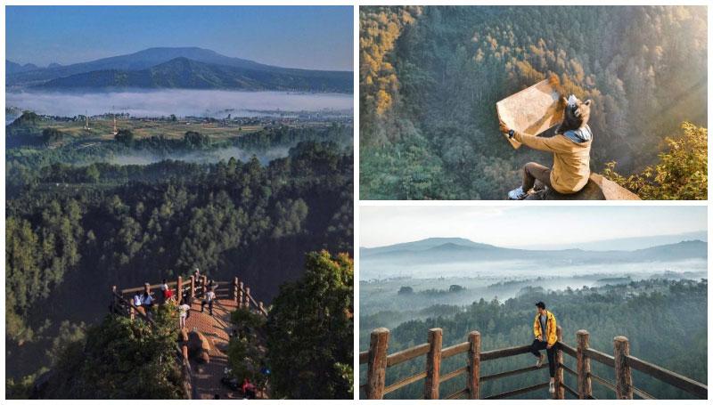 Tebing Keraton, Spot Nikmatin Alam Bandung di Ketinggian – Hamparan Hutan Pinus yang Buat Mata Adem!