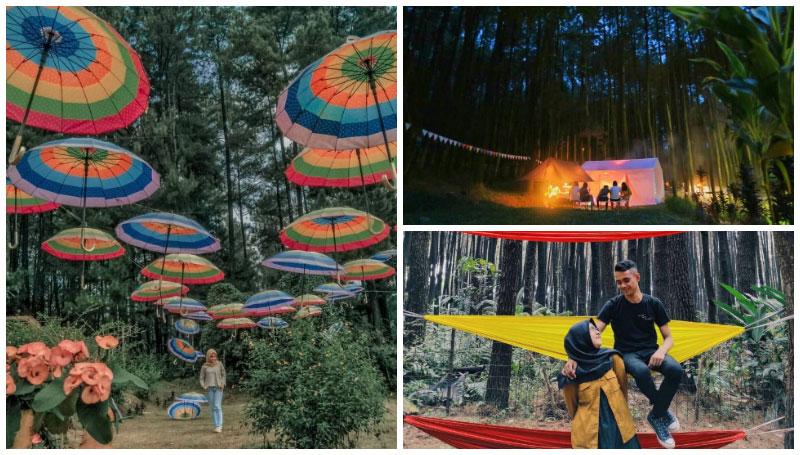 Wisata Gunung Pancar, Objek Wisata Hutan Pinus di Bogor dengan Banyak Spot Instagramable yang Cocok Dikunjungi Saat Weekend